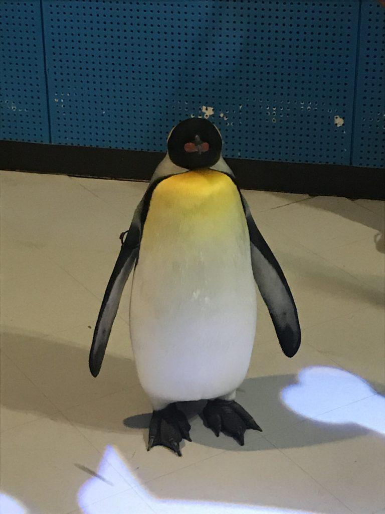 アドベンチャーワールドのペンギンアカデミー