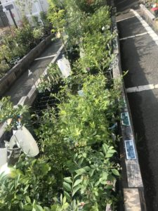 大阪府八尾市のオススメ園芸店・花屋さん コーナン 外環八尾山本店