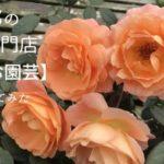 京都にあるバラ・クレマチス専門店【松尾園芸】
