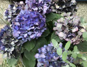 ドライフラワー 向く花・植物