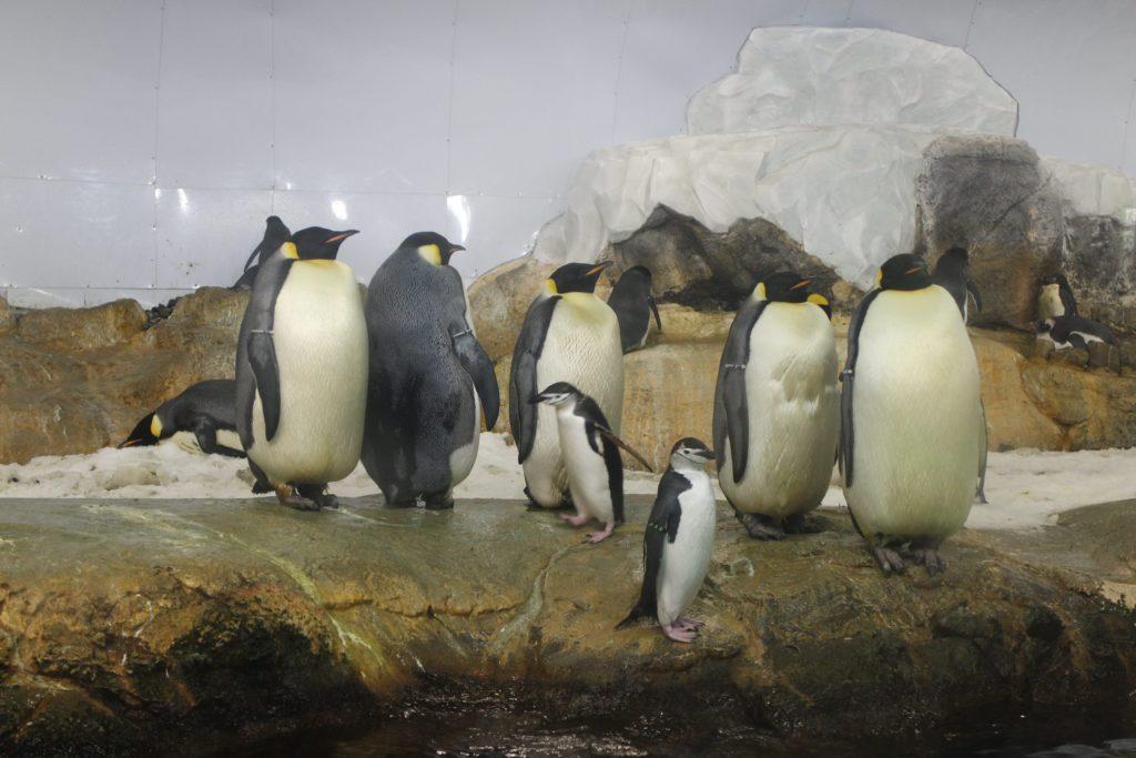 ペンギンがいる関西の水族館・動物園 おすすめランキング 京都水族館 アドベンチャーワールド