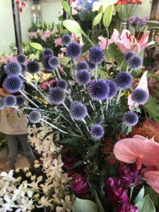 ドライフラワーにできる花・植物