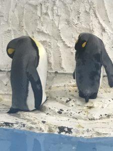 ペンギンがいる関西の水族館・動物園 おすすめランキング 天王寺動物園
