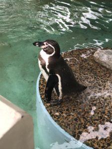 京都 動物園 ペンギン