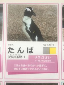 ペンギンがいる関西の水族館・動物園 おすすめランキング 京都水族館