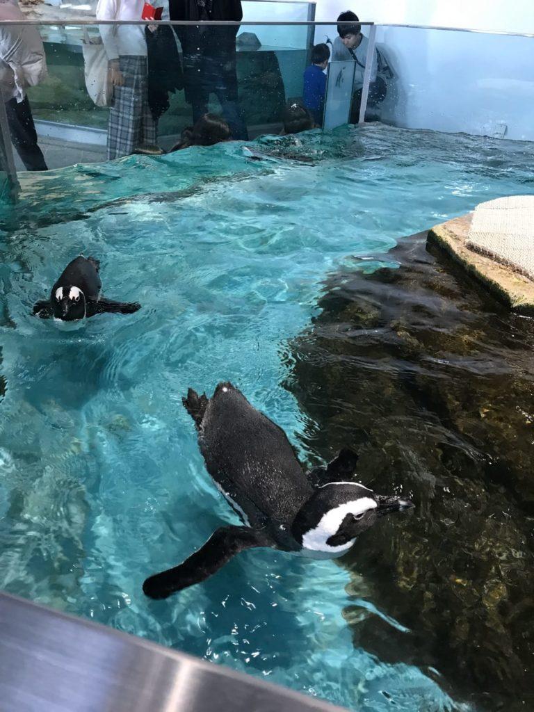 ペンギンがいる関西の水族館・動物園 おすすめランキング ニフレル