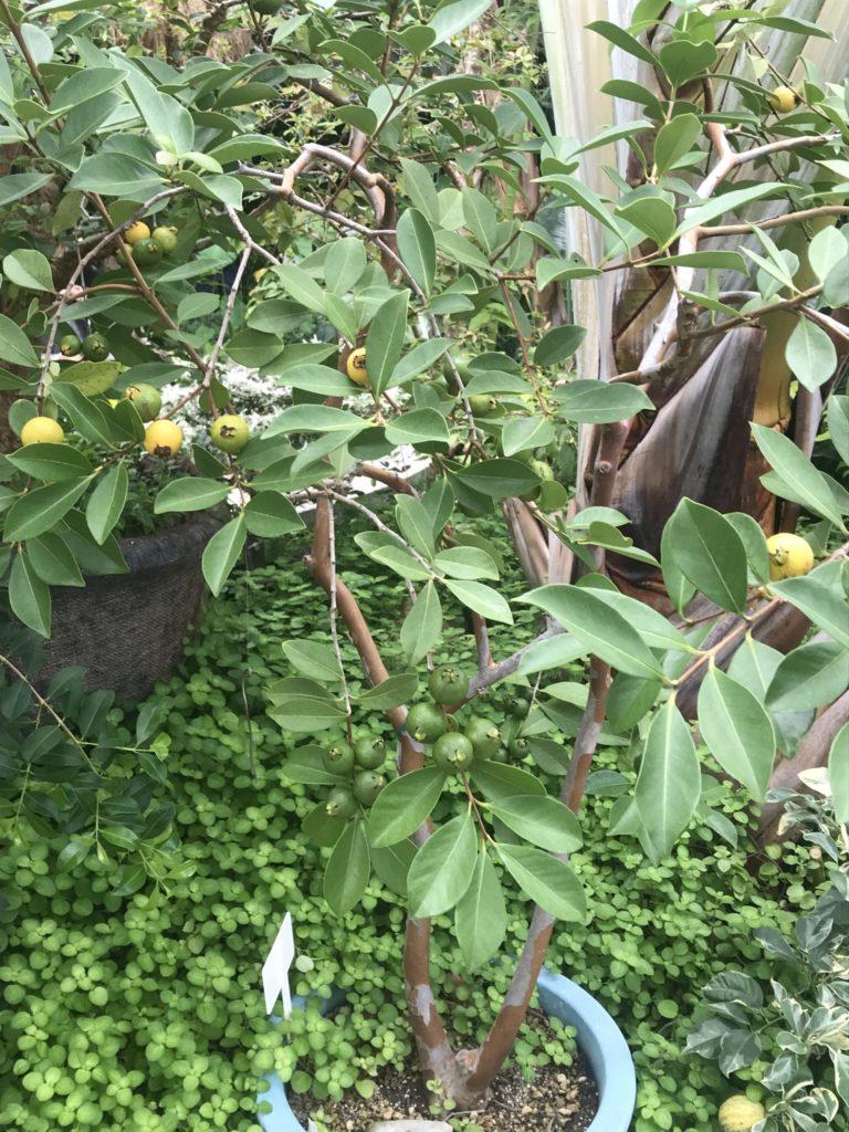 咲くやこの花館【鶴見緑地の温室】